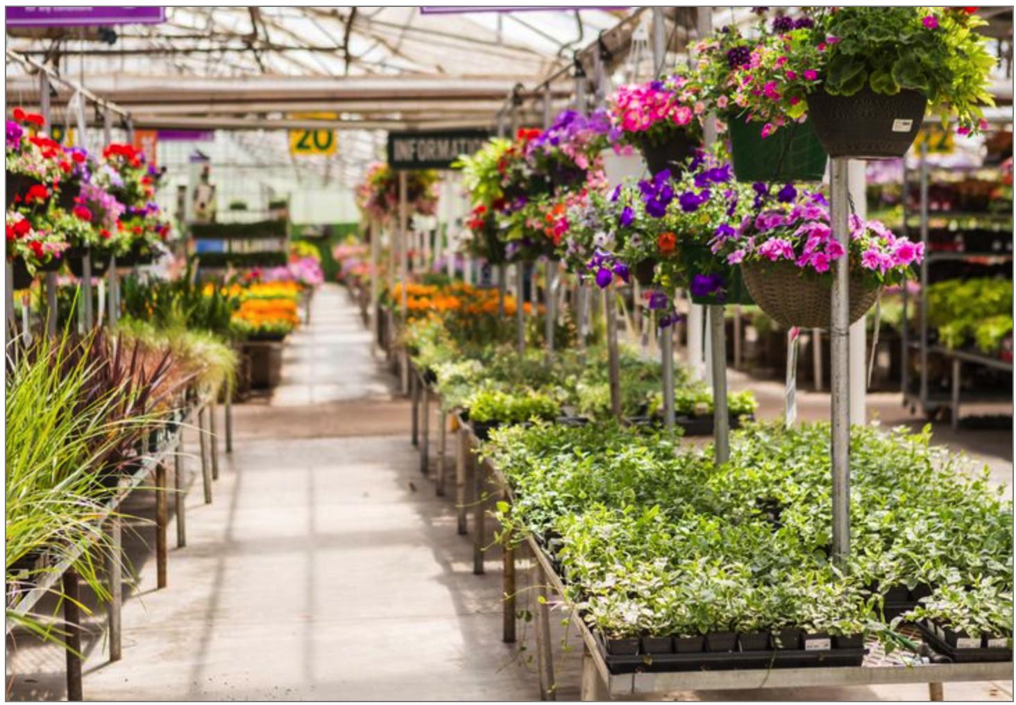 Garden Centre Sales Grew By 4.5% in 2019