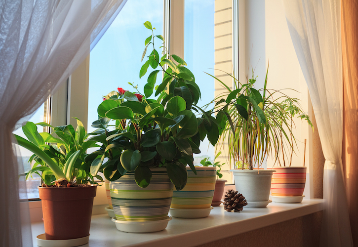 2019 The year of the House Plant – GCA
