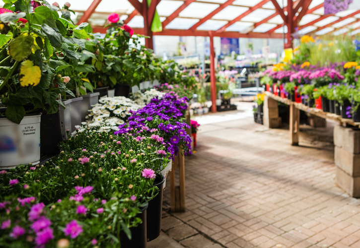 Garden Centres in England can reopen from Wednesday